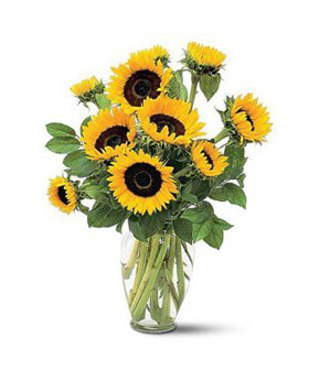 Warm Blessings - sunflowers to China